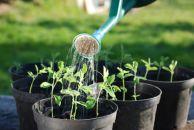 Tipps zu Blumen, Planzen, Garten