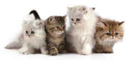 Haushaltstipps zu Haustieren und Schädlingen